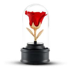 JoyFlower情人节进口永生花礼盒生日礼物美女与野兽带灯旋转音乐盒玻璃罩图片